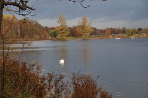I Damhussøen holder mange forskellige svømmefugle til. Blandt andet svaner. Foto: DN