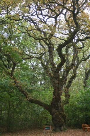 Dronninglund træer