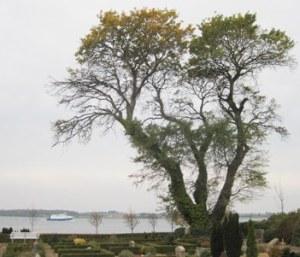 Fåborg_træer_TGR_5