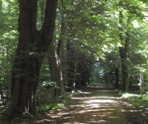 Hollufgård_stengærder_træer_TGR