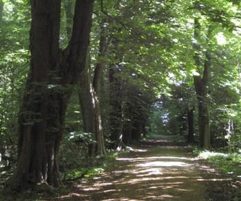 Hollufgård – stengærder og træer