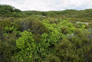 Kærgård Klitplantage og Fiil Sø