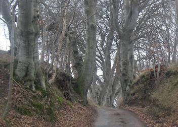 Katholm – hulvej og alléer