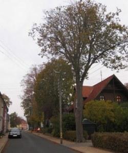 Kloster_Alle_TGR