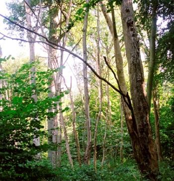 Longelse Bondegårdsskov