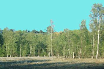 Lyngby Åmose, Lyngby Sø og Bagsværd Sø