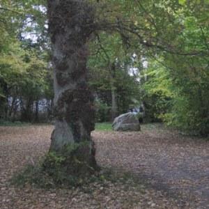 Præstegårdsskov_TGR