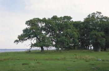 Skejten og Lilleø