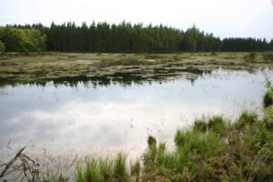 Stråsø_Plantage_PHH