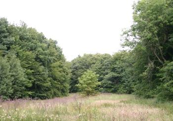 Stubbæk Skov