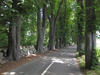 Ulriksholm – allé og stengærde